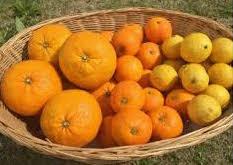 ふるさと納税の季節のフルーツセット
