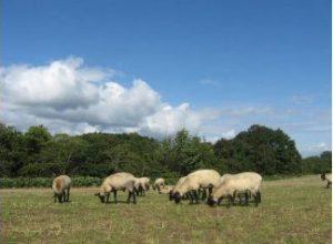ふるさと納税で貰える羊一頭