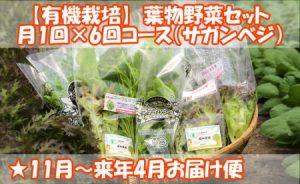 ふるさと納税で貰える野菜定期便(葉物野菜セット 月1回×6回コース)